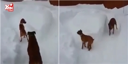 Bất ngờ khi cả chó cũng thích chơi Cá tháng Tư