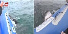 Cận cảnh khoảnh khắc cá mập tấn công thuyền gây sốc