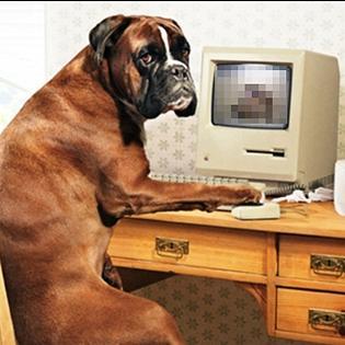 Hài hước với những thú vui của chó khi vắng chủ nhà
