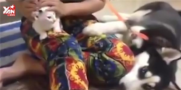 Hài hước chú chó kiên quyết giành chủ với mèo