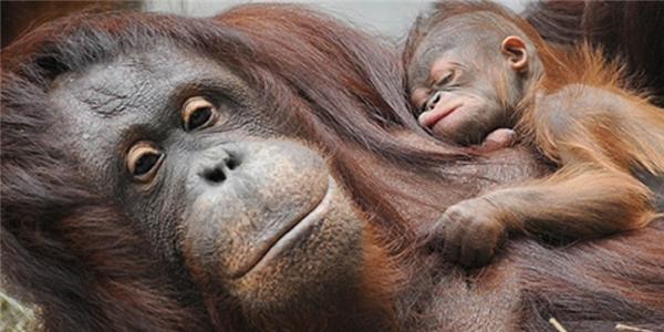 14 sự thật thú vị trong thế giới động vật bạn sẽ phải há hốc mồm