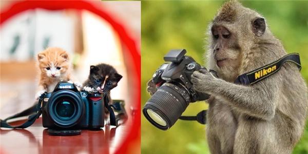 """17 khoảnh khắc động vật làm """"nhiếp ảnh gia"""" cực ngộ nghĩnh"""