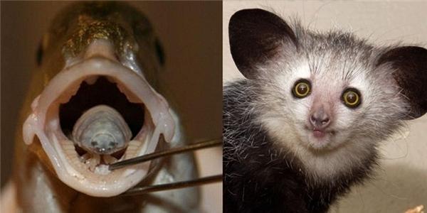 Những loài động vật kỳ dị nhất hành tinh