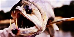 6 loài thủy quái cực nguy hiểm trong rừng Amazon