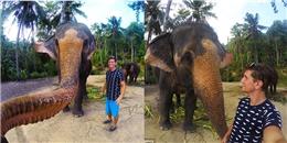 Hy hữu voi giật máy ảnh của du khách và... tự sướng