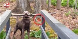 Danh hiệu  thông minh nhất năm  đã thuộc về chú chó này