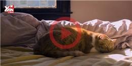 Học hỏi bé mèo cách hưởng thụ cuộc sống
