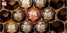 Một chú ong sẽ lớn lên như thế nào trong 21 ngày đầu đời?