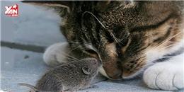 Phiên bản đời thực của Tom và Jerry gây sốt