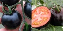 'Không thể tin nổi' 200.000đ vẫn không mua được 1kg cà chua