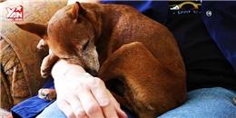 Bên trong 'Viện dưỡng lão' dành riêng cho chó