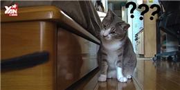 Cận cảnh chú mèo Ninja  đốn tim  cư dân mạng