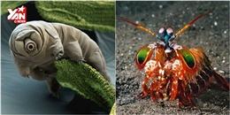 Những loài động vật có siêu năng lực khiến bạn  trố mắt
