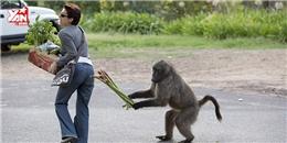 Những màn trộm đồ  bá đạo  của khỉ