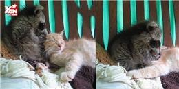 Khi chồn tưởng mèo là... anh em ruột