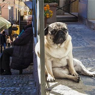 Thế giới sẽ như thế nào khi cún cưng  biến hình  khổng lồ?