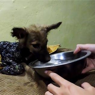 Màn thoát chết thần kỳ của chú chó bị mắc kẹt bên dưới nhựa đường