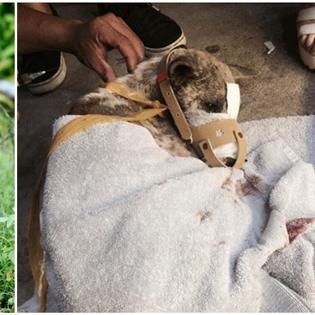 Xúc động mạnh với khoảnh khắc chú chó bị buộc mõm được giải cứu