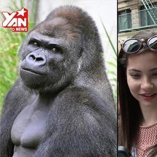Phân tích độ đẹp trai của chàng khỉ  hotboy  nổi tiếng