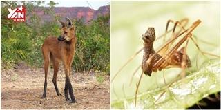 Những động vật có thật như  bước ra  từ Photoshop