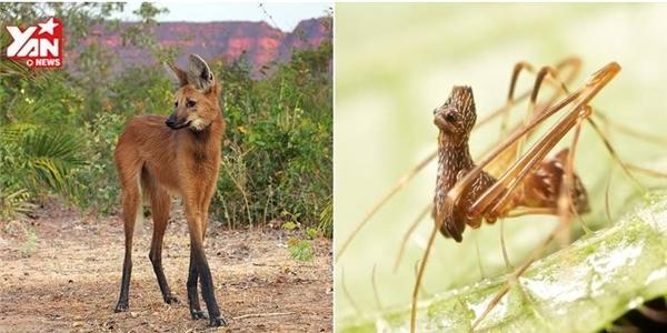 """Những động vật có thật như """"bước ra"""" từ Photoshop"""