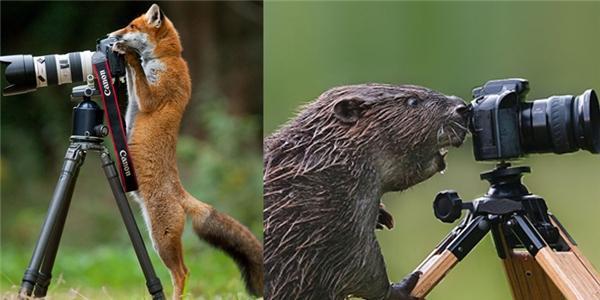 Chết cười khi động vật thử tài làm phó nháy