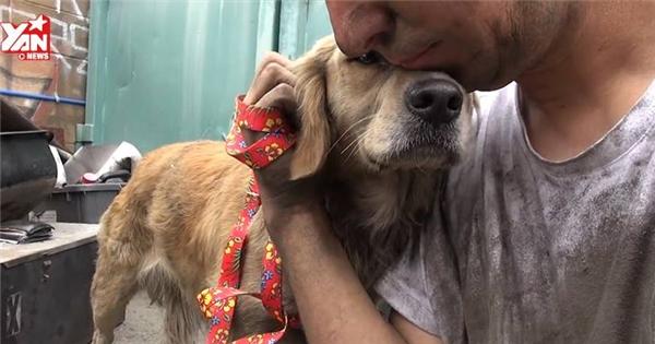Xúc động hành trình giải cứu chú chó hoang