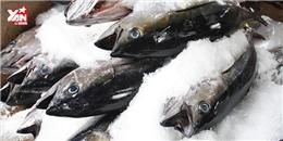 Sốc: Cá bất ngờ sống lại sau hai năm bị đông lạnh