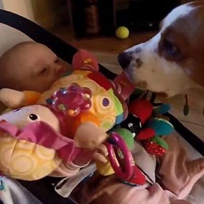 Bất ngờ với chú chó biết tặng quà hết sức dễ thương