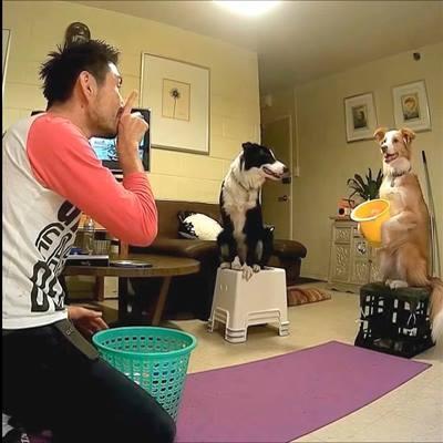 Bất ngờ với chú chó chụp bóng bách phát bách trúng
