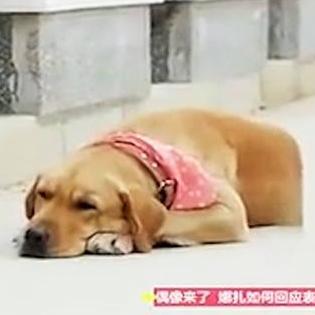 Rơi nước mắt với chú chó đi xin hoa về thăm mộ chủ