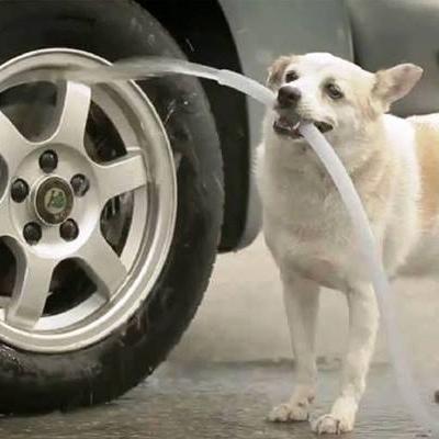 Ngưỡng mộ chú cún biết làm việc nhà cực  đảm đang