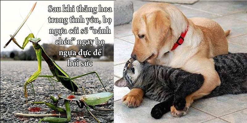 """Những sự thật """"ngược đời"""" về động vật khiến bạn phải trố mắt ngạc nhiên"""