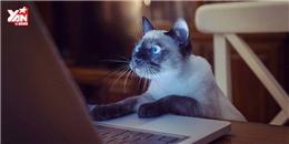 """Cười đau bụng với tạo dáng """"bá đạo"""" giống như người của mèo"""