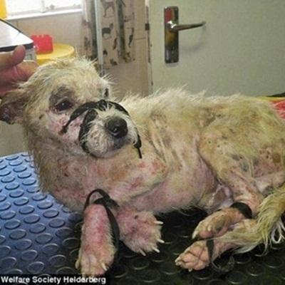 Xót xa chú chó bị trói chặt nằm bơ vơ trên đường ray xe lửa