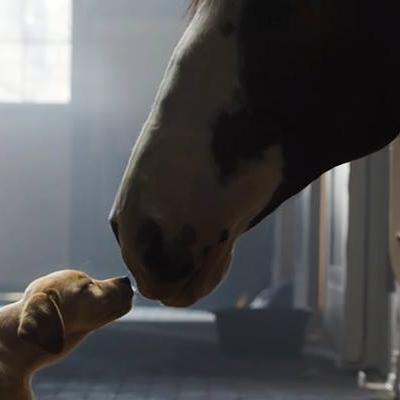 Tình bạn xuyên biên giới giữa chó và ngựa khiến bạn rơi nước mắt