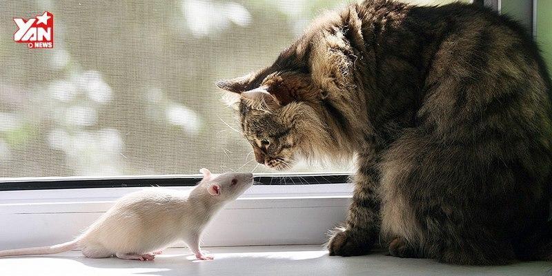 Tom và Jerry xuất hiện ngoài đời thực hài như trên phim