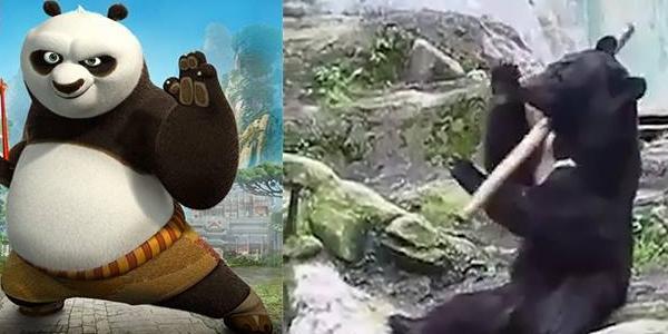Lộ diện gấu Po ngoài đời thực cực kì giỏi võ