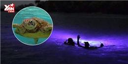 Phát hiện loài rùa đồi mồi phát sáng như đèn dưới đáy biển