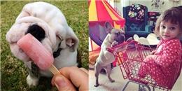 """Chó Bulldog và những hành động """"đốn tim"""" chủ"""