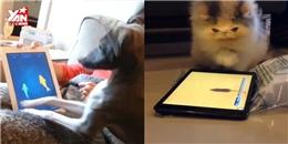 Khi công nghệ là 'kẻ thù truyền kiếp' của thú cưng