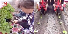 'Choáng' với công nghệ trồng và thu hoạch của nước ngoài