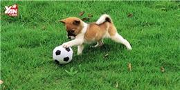 Những trò vui nhộn của thú cưng khiến bạn cười 'ngất'