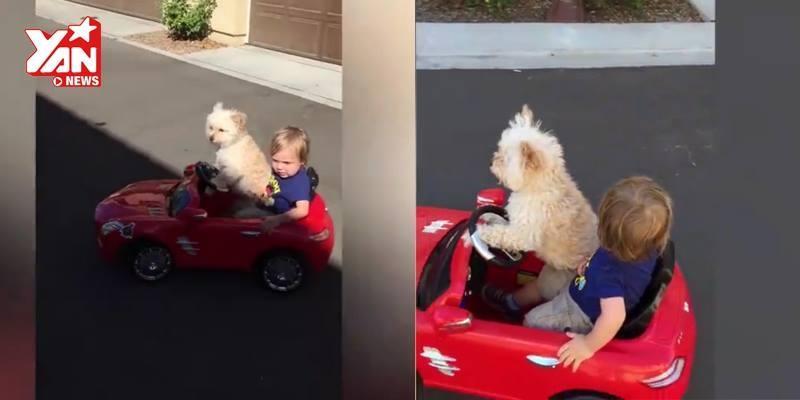 Lái xe chở cậu chủ đi chơi, chó cưng thu hút triệu lượt xem