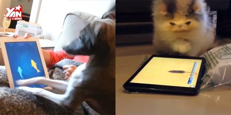 """Khi công nghệ là """"kẻ thù truyền kiếp"""" của thú cưng"""