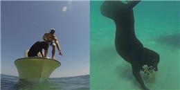 Bất ngờ với chú chó lặn biển bắt tôm hùm cực chuyên nghiệp