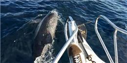 Nhóm bạn may mắn được cá heo lẫn cá voi  dẫn đường  trên biển
