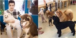 Dân mạng tranh luận 'nảy lửa' về câu chuyện 15 chú chó bị đầu độc