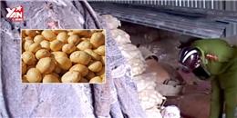 Lập chốt chặn khoai tây Trung Quốc vào chợ nông sản 24/24h