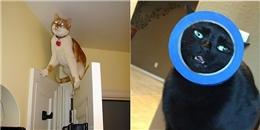 'Cười té ghế' trước tai nạn 'khó đỡ' của những chú mèo